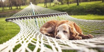 Balancing rest and recovery with myositis